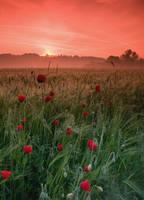 morning landscape 8 by wienwal