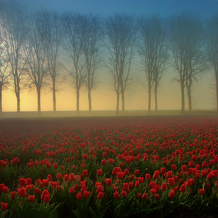 morning landscape 34 by wienwal