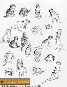 Meerkat Project Short sketches