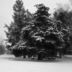 Tree by dchon