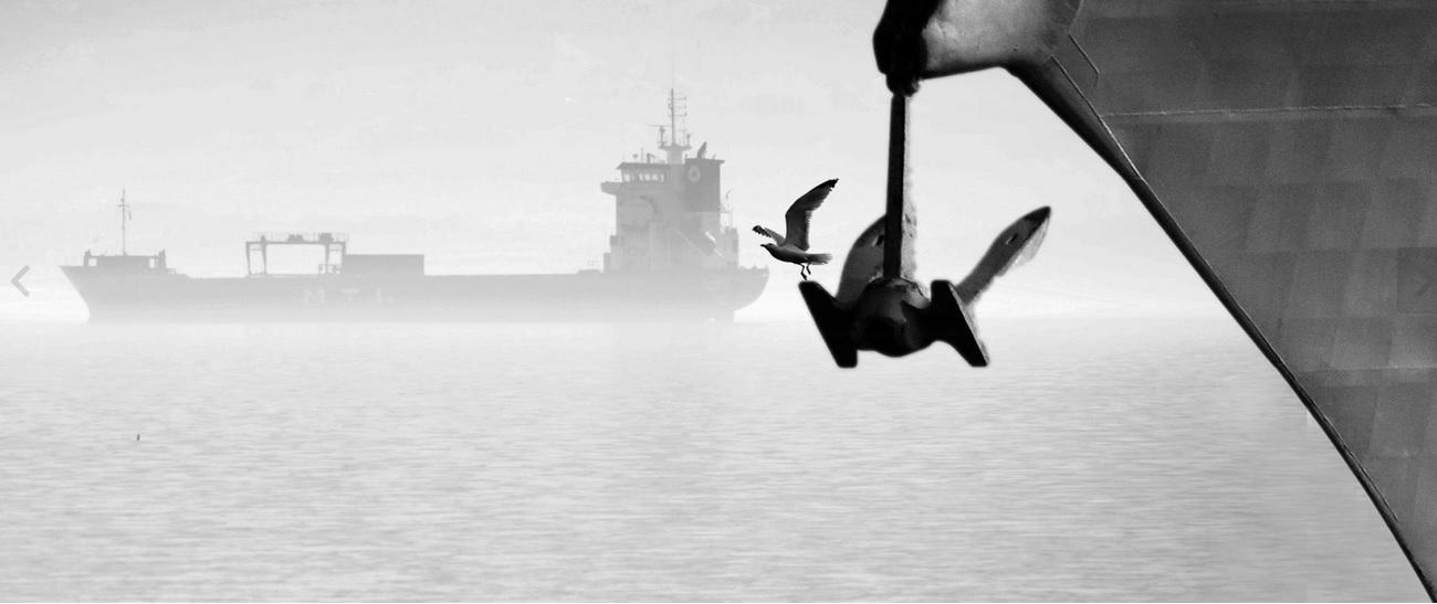 Seagull and fog