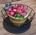 Potted Flowers in Garden