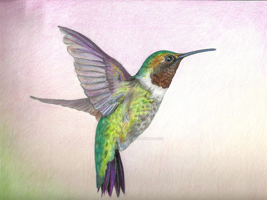 Hummingbird in colored pencil by maribel gnlz
