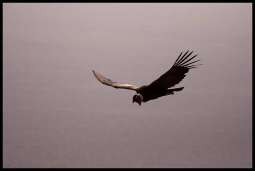 Flying Condor