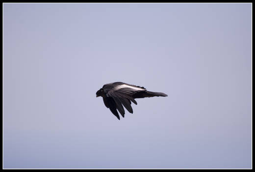 Aerodynamic Condor