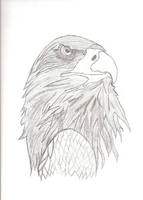eagle by chrisw12355