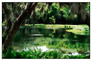 Sarasota,FL. by OzZcr
