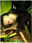 Little Monkey 1