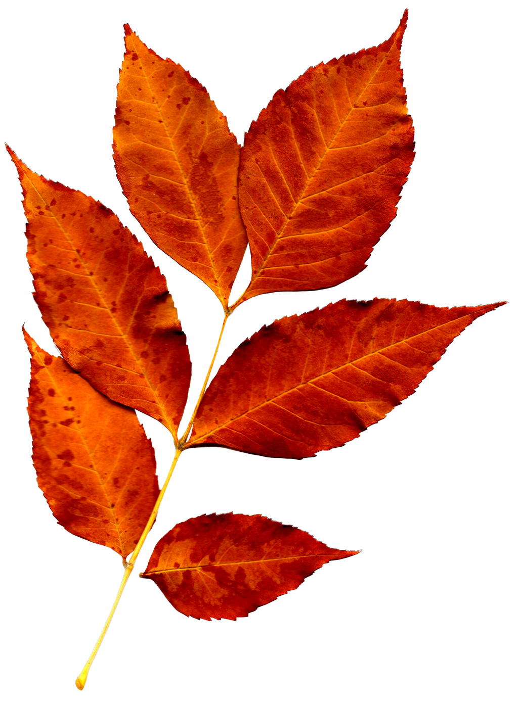 Autumn, leaves [png] by nastyalovekorea on DeviantArt