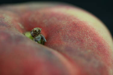 What spider in that peach? by Kellisanth