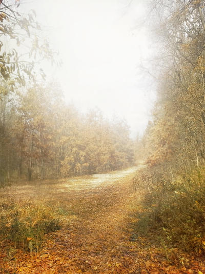 Autumn-Path - UNRESTRICTED by AngeliaStocks