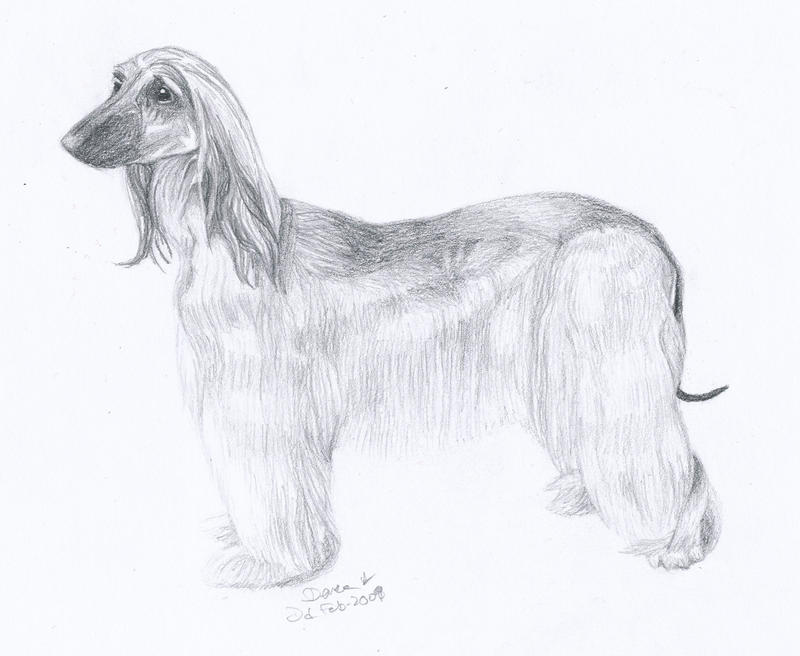 Dog Breeds From A To Z - Dog Breeds - photo#44