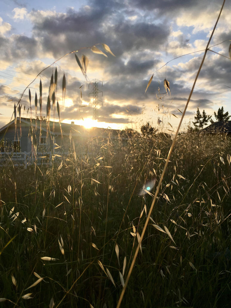 Grasses and the Sunset by Sagehills