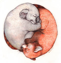 Koala and red panda