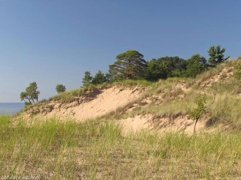 Dunes at Saugatuck State Park by asukouenn