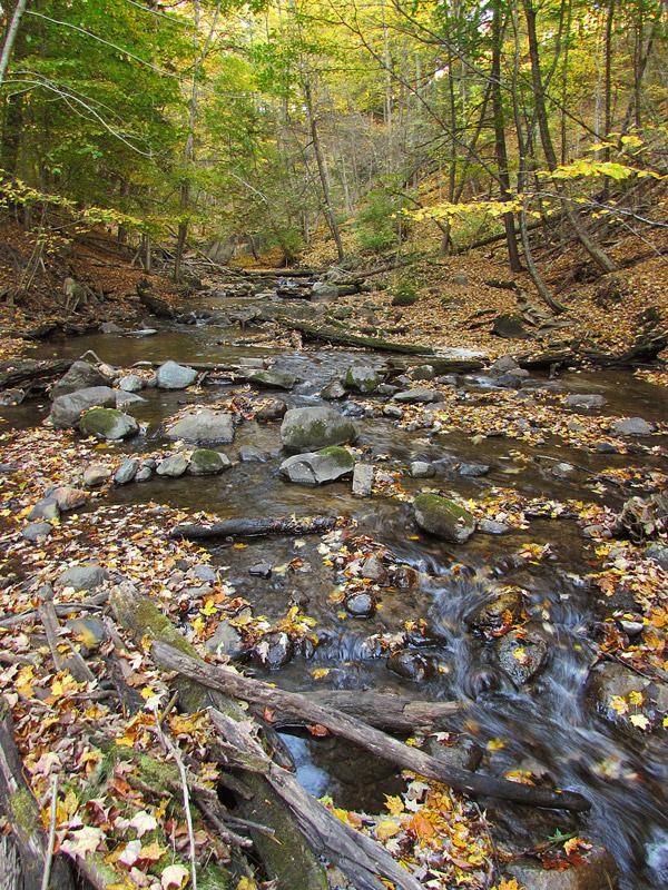 Autumn creek by asukouenn