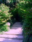 steps of wonder