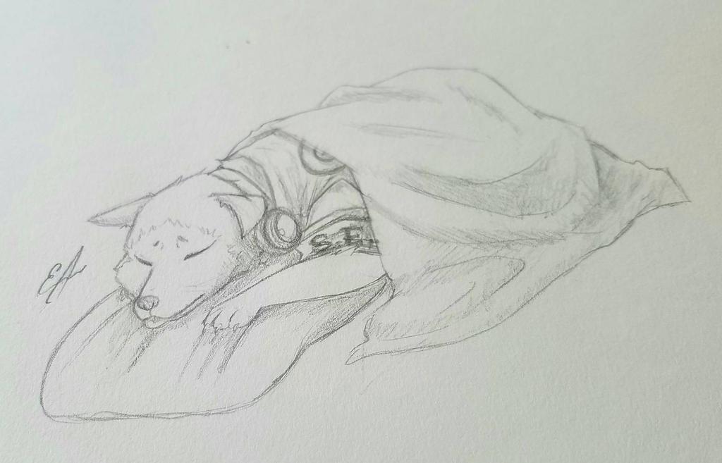 sleeping Korumaru  by doitboii