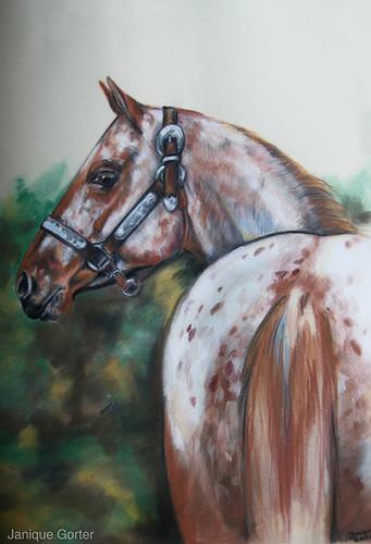 Appaloosa horse Gentl by Jniq