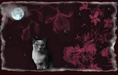 Night Kitty by CinKat