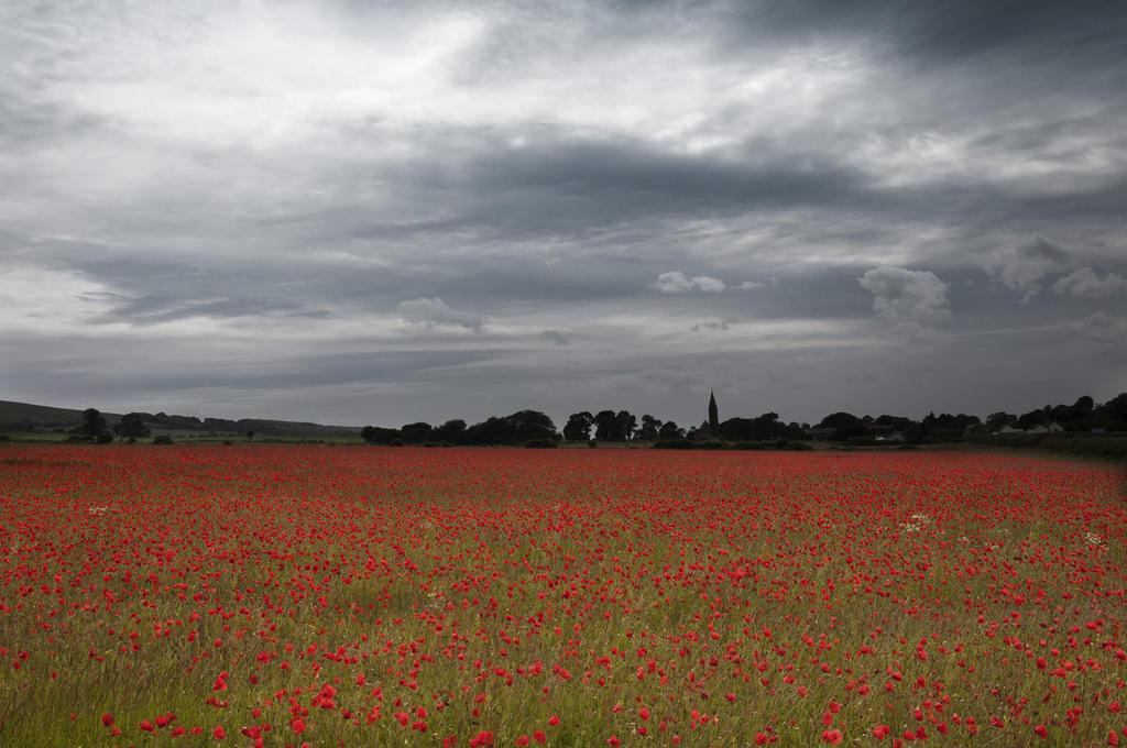 Evening Poppies by BikeBoyPunk