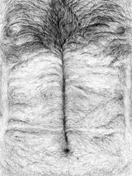 Nando torso by picasio