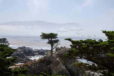 Lone Cypress