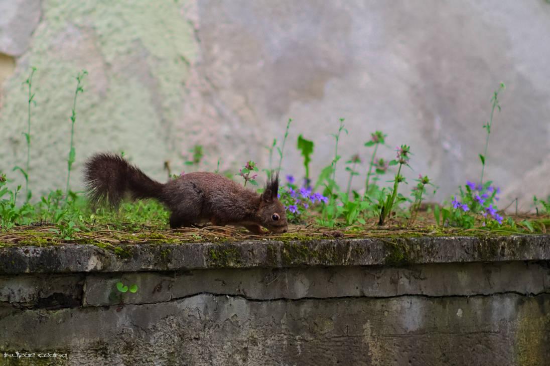 squirrel3 by Csibu83