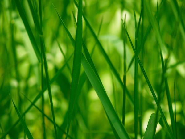 grass 003 by juuichimei