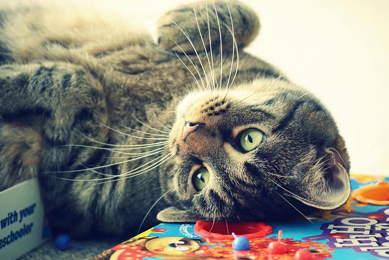 Can I Play? by NineOneThree