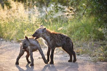 Hyena Pups by TaikutsunaMajo