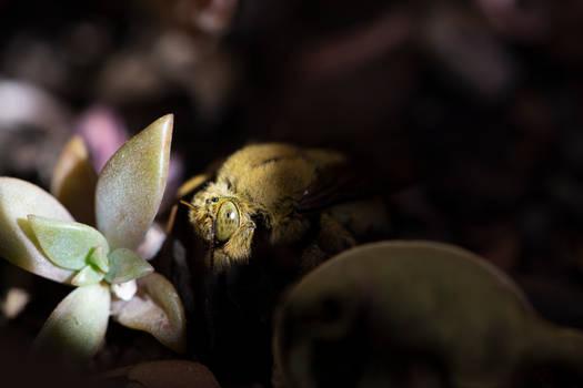 Little Bee Budy