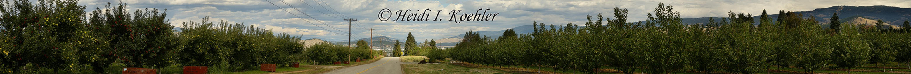 2014-09-08-s2-036-KLO-ORCHARD-PANO-web by 12monthsOFwinter