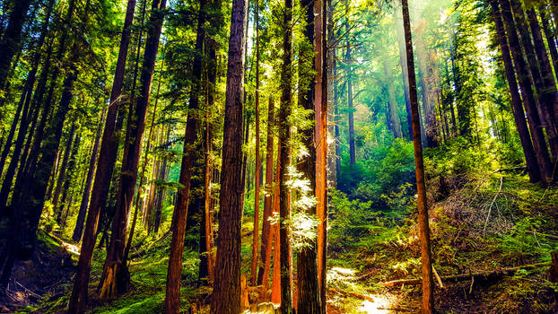 Cowell Redwoods State Park