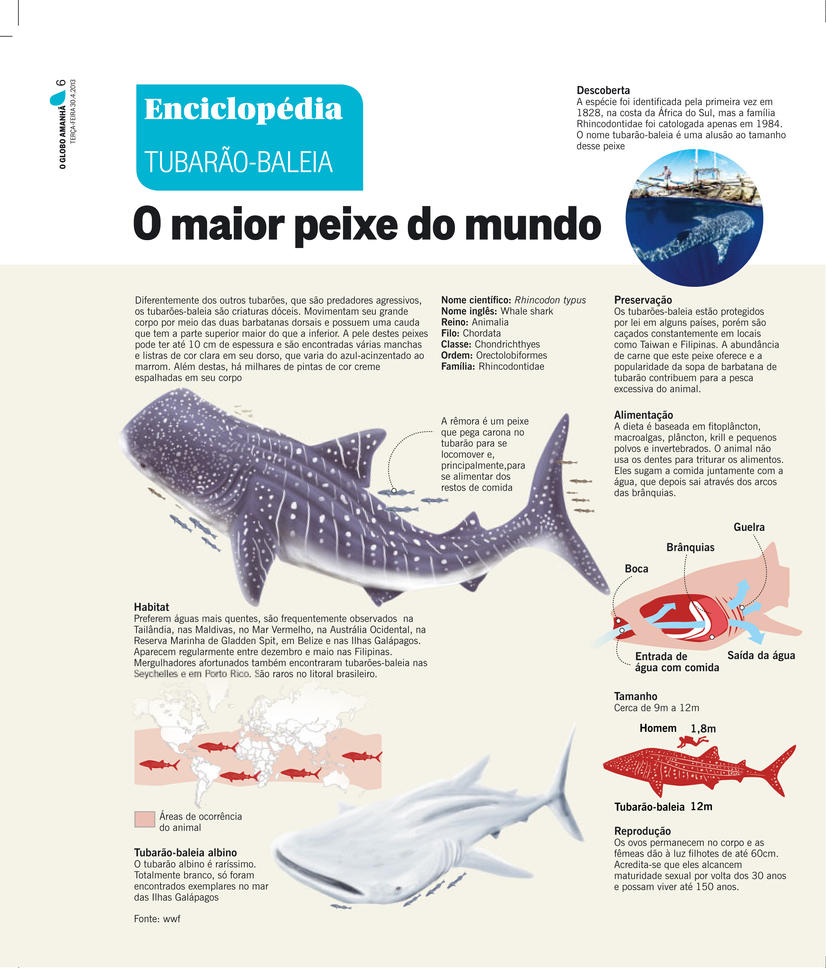 Whale Shark Infographic by pauloomarcio on DeviantArt