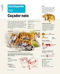 Tigers Infographic