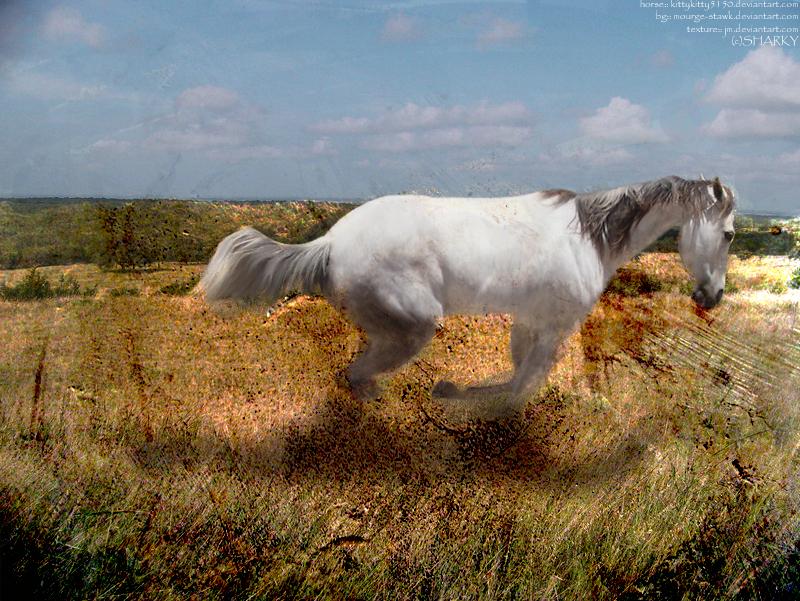 horsei n field by sharkybarky