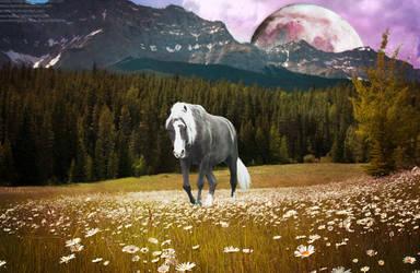 horse and moon by sharkybarky