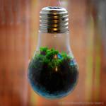 Bulb Mossarium