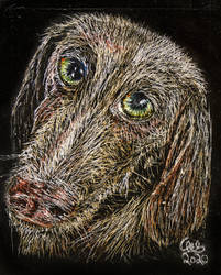Crooked Nosed Dog (4x5 Scratchboard)