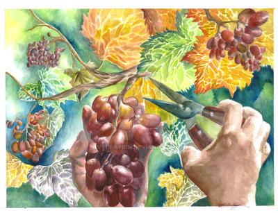harvest time- grape by vybration
