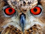 Eagle Owl by daemon-spyder