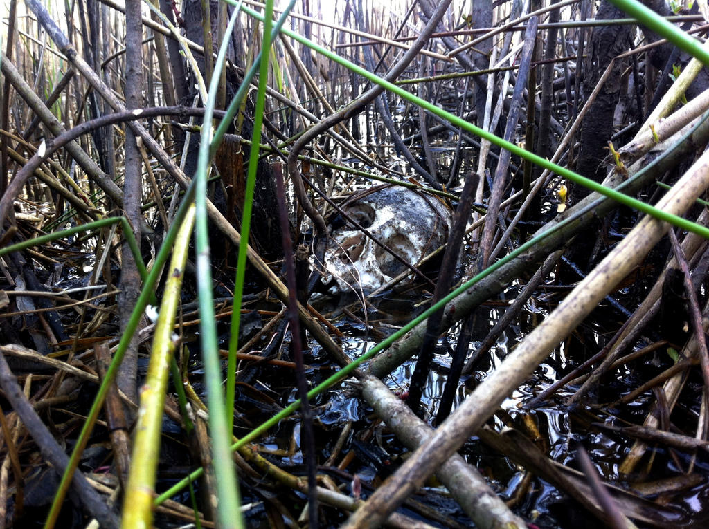 Skull in the water by Dewfooter