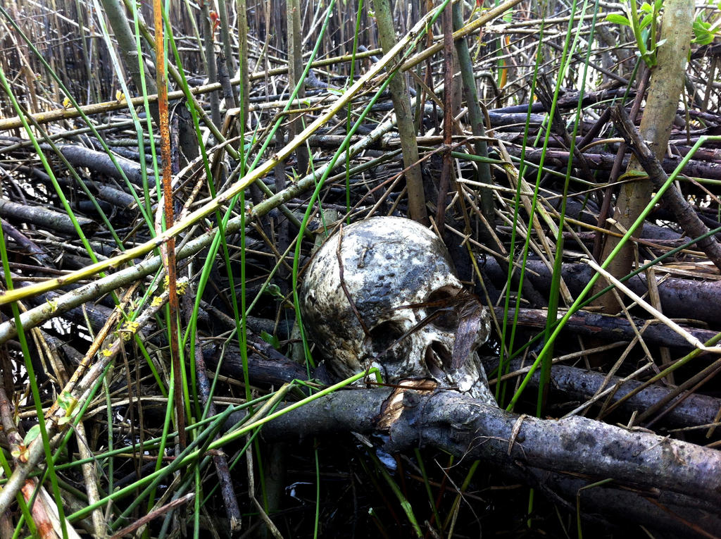 Skull in the water 2 by Dewfooter