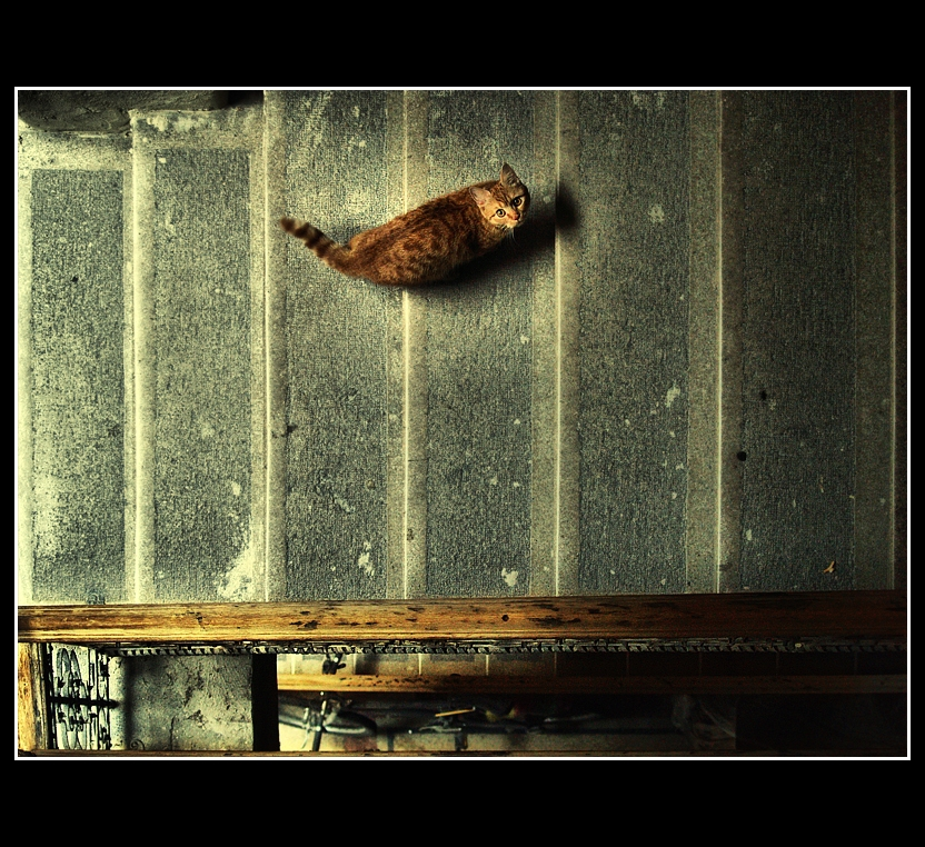 where are you?_ by Trifoto