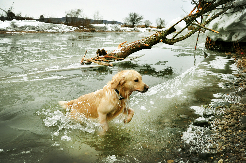 Fun at the cold river by Trifoto