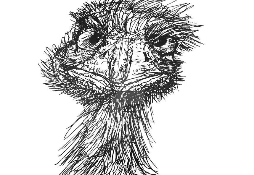 Emu by Quetzal-Queen