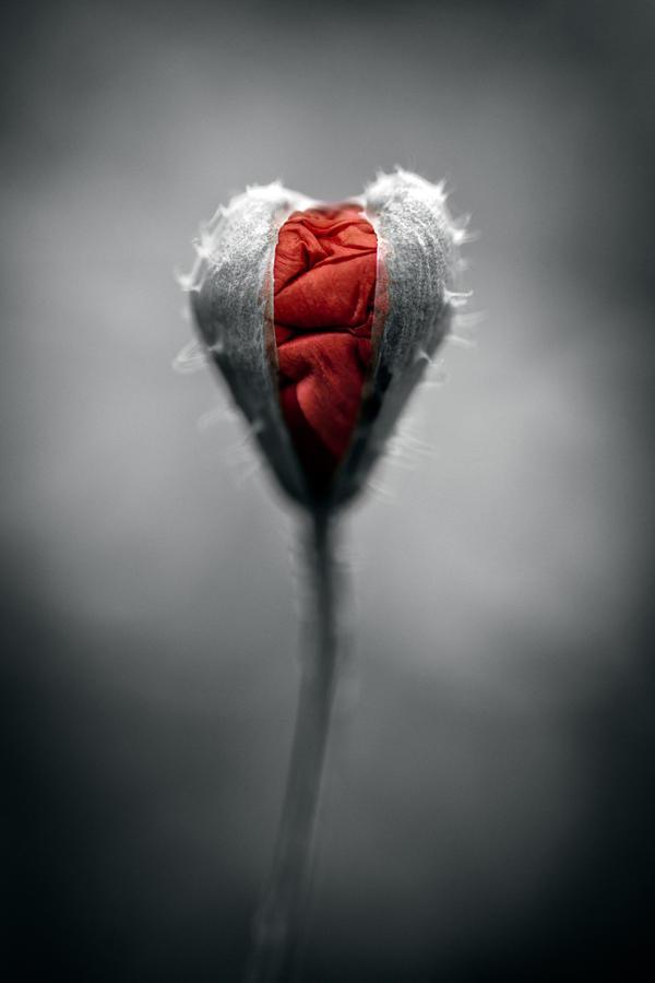 http://fc07.deviantart.net/fs71/i/2010/286/8/5/growing_love_by_illpadrino-d30ntfm.jpg