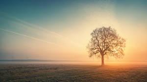 Morning Glory by Matthias-Haker
