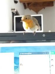 A cute bird on my computer :D by ChichiDaKitsu